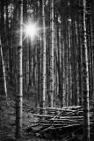 forest.bw_170926_1099.jpg