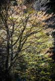 Landschaft.f_171005_1507.jpg