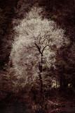 Landschaft.f_171010_1881.jpg