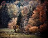 Landschaft.f_171017_2128.jpg
