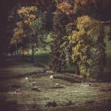 Landschaft.f_171007_1748.jpg