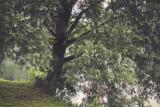 Landschaft.f_150708_9402.jpg