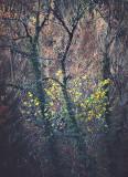 Landschaft.f_181018_4631.jpg