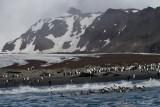 PinguinosOrilla.jpg