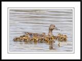 Lakeside Park Birding