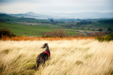 17th November 2018  hound in the long grass