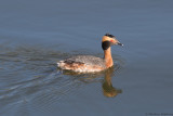 Forsyth County, North Carolina - Birds