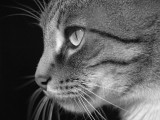 P8174544_cat.jpg