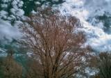Infrared Photos
