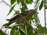 Mystry bird