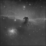 Horsehead small B and w