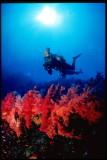 Assumption island coral reef