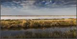 Flying above salt marsh