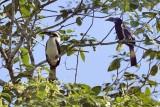 Birds of the Philippines