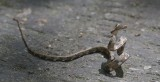 Amphibians, spiders and Reptiles