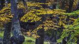 170417-3_forest_foliage_2901m.jpg