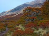 170410-3_trail_foliage_0677m.jpg