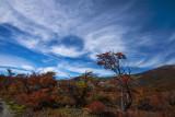170413-2_tree_cloud_1701m.jpg