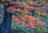 170418-4_lakeside_foliage_3034s.jpg