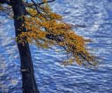 170418-4_lakeside_foliage_3017s.jpg