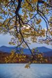 170418-4_lakeside_foliage_3004s.jpg