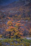 170419-4_foliage_tree_valley_3374s.jpg