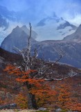 170419-4_foliage_tree_mtn_3371s.jpg