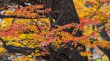170419-4_foliage_red_trunk_3187s.jpg