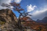 170419-4_foliage_bonsai_valley_3299s.jpg