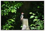 Le Rouge-Cloître et ses environs En Forêt de Soignes