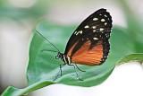 Butterfly2006-07-15-0002.jpg