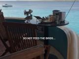 The birds took advantage of leftovers. / 2017_02_04_Bonaire_iPhone _193 dont feed birds.jpg