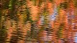Frissons d'automne