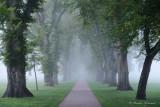 Foggy Morning at CSU Oval