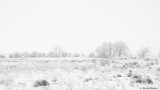 Snowing at the Arapahoe Bend Nature Area