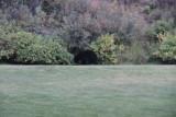 a bear in the back yard