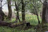 Glenade - Trunks and Flowers