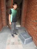 Caught an Asian Koel!