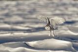 on the snow.jpg