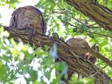 Owls Overhead