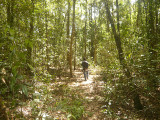 Forest trail at Cat Tien