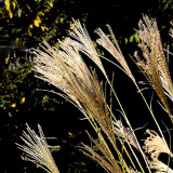 Another View of the Pampas