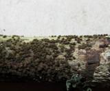 Echinosphaeria canescens 001 on br-leaf twig Daneshill Lakes LNR Notts 14-5-2016.JPG