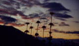 Huaraz207.jpg