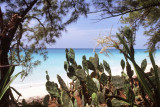 Cactus and Beach