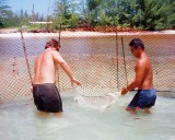 Netting Shark