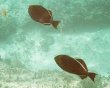 Pair of Fish on Wreck