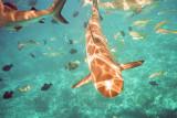 Shark Swimming Under Me