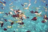 Tropical Fish Frenzy