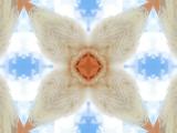 Furred_Flight_by_Artist_Nancy_Good.jpg